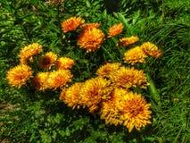 Flover. Nature grass orange green Stock Photography