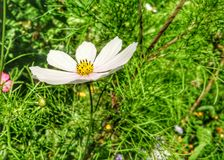 Flover. Nature grass white green Stock Image