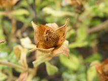 Flovers植物 免版税图库摄影