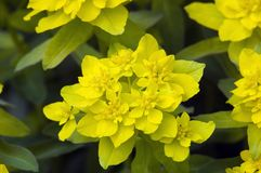 Flovers. Yellow flovers on green background Stock Image