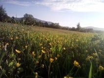 Flovers amarillos Fotos de archivo