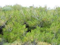 Flovers rośliny Zdjęcia Stock