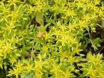 Flovers växter Arkivfoto