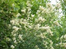 Flovers växter Royaltyfri Bild