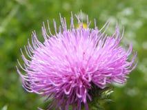 Flovers växter Fotografering för Bildbyråer
