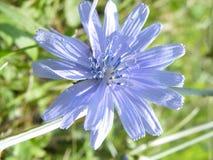 Flovers växter Royaltyfria Bilder