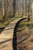 Flow broadwalk in Kemeri National Park. Flow wooden broadwalk in Kemeri National Park. Big swamp wetlands near Jurmala, Latvia Stock Photography