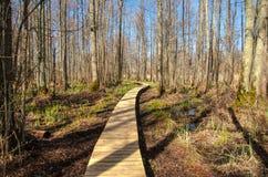 Flow broadwalk in Kemeri National Park. Flow wooden broadwalk in Kemeri National Park. Big swamp wetlands near Jurmala, Latvia Royalty Free Stock Photography