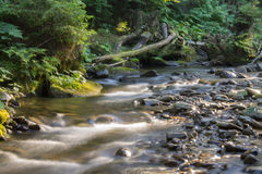 Flow in mountain river Royalty Free Stock Image