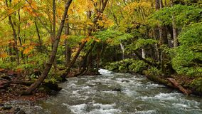 Flow of Oirase Mountain Stream in autumn at Oirase Gorge