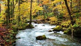 Flow of Oirase Mountain  Stream in autumn season.
