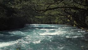 Flow of powerful river in a forest, blue water is shining under sunshine. Springtime in woodland, blue picturesque river is streaming inside in daytime. Tranquil stock footage