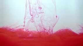 Flow of red ink moving in water on white background. Acrylic ink swirling in water. Liquid paint create abstract, ever. Changing shape of clouds. Traces of stock video footage