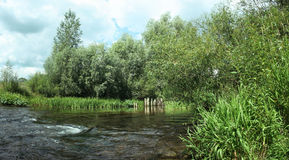 The flow of the river among the reeds and bushes Stock Image