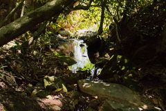 Flow of the small river in the forest. Small flow of river within forest inside the State Park of the Serra de Caldas Novas royalty free stock image