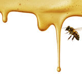 Flow of sweet honey on the white background Royalty Free Stock Photo