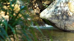 Flow transparent water in tropical river between big rocks and boulders. Stony river in tropical forest. Natural. Landscape in tropical jungle stock footage
