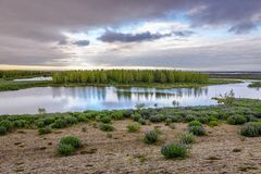 Trees in Iceland. Flowage of river Kudafljot River in southern Iceland royalty free stock images