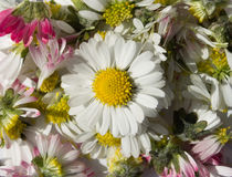 Flowe background Stock Images