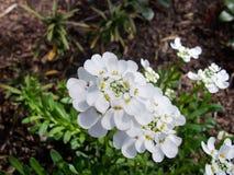 Flowe Drops Petals. Rainy Day Flowers Stock Image