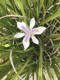 Flowe púrpura Imagen de archivo libre de regalías