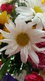 Flowe. Spring flowers  white Royalty Free Stock Photos