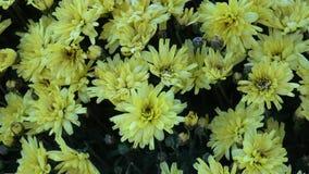 Floweers φθινοπώρου στον κήπο φιλμ μικρού μήκους