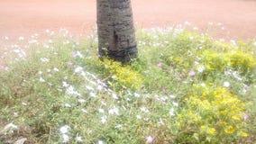 Flowef. Bolpur shantiniketan park in India Royalty Free Stock Photo
