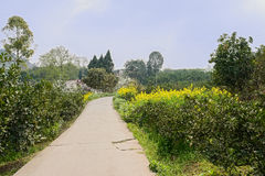 Floweirng countryroad to woody village in sunny spring Stock Image