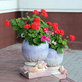 A flowepot with flowers. Street ceramic vase with flowers Royalty Free Stock Photos