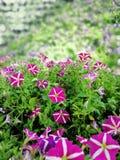 Flower†‹menchie obrazy royalty free