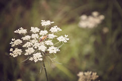 Flower主教的 图库摄影