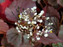 Flower 001 Royalty Free Stock Image