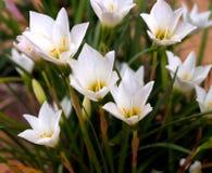 Flower  002 Royalty Free Stock Image