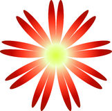 Flower. Daisy,illustrator ,red,petals,isolated  on white background Royalty Free Stock Image