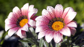 Flower Stock Photography