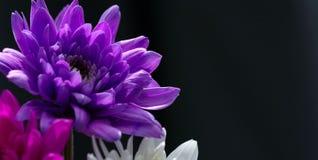 Flower. Macro Stock Photos