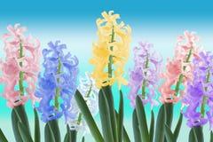 Flower. Few color flower on blue gradient background stock photo