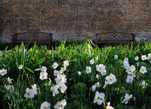 Flower. Two benches and spring flowers Royalty Free Stock Photos