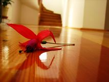 Flower. House interior detail with red flower on a wooden floor and stairs in the background Stock Photos