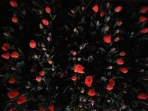 Flowers at night royalty free stock photography
