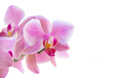 Flower. Royalty Free Stock Images