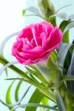 flower στοκ φωτογραφία