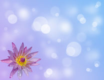 Flower. On the blue background Royalty Free Stock Images