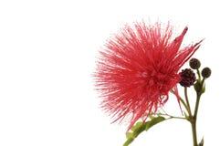 Flower. Border of Lovely red flower Royalty Free Stock Images