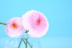 Flower. Pink flower-present pretty,spring stock photos