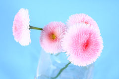 Flower. Pink flower-present pretty,spring royalty free stock photos
