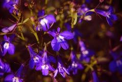 Flower. Garden  close-up Stock Photo