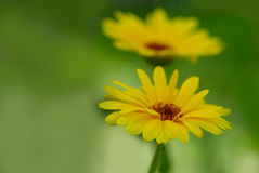 Flower. Beautiful flower in the garden Royalty Free Stock Photography