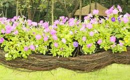 Flower. Basket in park garden Stock Image
